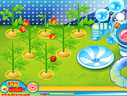Sue Tomato Factory